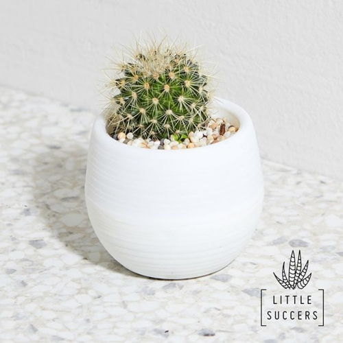 Simply spend $60 or more in-centre to claim your BONUS @Littlesuccers Succulent, valued at $40.00! Saturday 6 October, only. Outside Woolworths. Terms and conditions apply. See our website for details. . . . #southgate #southgatesylvania #sylvania #freebies #southgateshoppingcentre #byISPT #littlesuccers